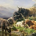 Highland Cattle Print by William Watson