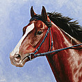 Horse Painting - Determination Print by Crista Forest