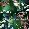 Humming Birds 2 Poster by JQ Licensing