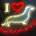 I Love Dachshunds Print by Anthony Ross
