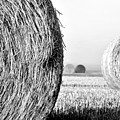 In the Hay -black and white Print by Dana Walton
