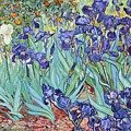 Irises Print by PG REPRODUCTIONS