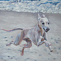 Italian Greyhound on the Beach Poster by Lee Ann Shepard