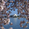 Jefferson Memorial on the Tidal Basin DS051 Print by Gerry Gantt