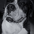 Just Handsome II Print by DigiArt Diaries by Vicky B Fuller