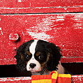 King Charles Cavalier Puppy  Print by Garry Gay
