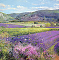 Lavender Fields in Old Provence Poster by Timothy Easton