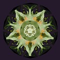 leafy mandala Poster by Rene Crystal