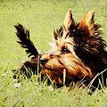 Little dog Print by Angela Doelling AD DESIGN Photo and PhotoArt
