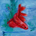 Little Red Betta Fish Print by Brenda Thour