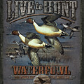 Live to Hunt Pintails Poster by JQ Licensing