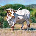 Longhorn Bull Poster by Sue Halstenberg