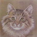Maine Coon Cat Print by Dorothy Coatsworth