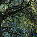 Majestic Weeping Willow Poster by Marion McCristall