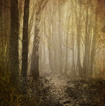 misty woodland path Print by Meirion Matthias