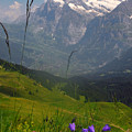 Mount Wetterhorn And The Grindelwald Print by Anne Keiser