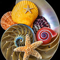Nautilus with sea shells Print by Garry Gay