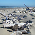 Ocean Coastal art prints Driftwood Beach Print by Baslee Troutman
