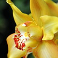 Orchid 24 Print by Marty Koch