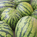 Organic Watermelon Poster by Wendy Connett