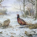 Pair of Pheasants with a Wren Poster by Carl Donner