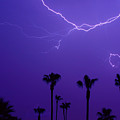Palm Trees and Spider Lightning Striking Print by James BO  Insogna