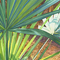 Palmettos and Stellars Blue Print by Marguerite Chadwick-Juner