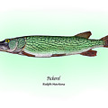 Pickerel Poster by Ralph Martens