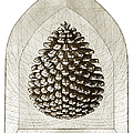 Pinecone by Charles Harden