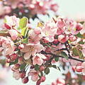 Pink apple blossoms Poster by Sandra Cunningham