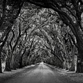 Plantation Oak Alley Print by Perry Webster