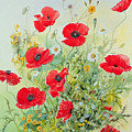 Poppies and Mayweed Print by John Gubbins
