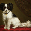 Portrait of a Spaniel Poster by Anonymous