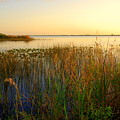 Pretty evening at the lake Print by Susanne Van Hulst