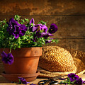 Pruning purple pansies Print by Sandra Cunningham
