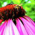 Purple Cone Flower Poster by Maria Massimiano
