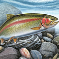 Rainbow Trout Stream Poster by JQ Licensing