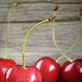 Red cherries on barn wood Print by Sandra Cunningham