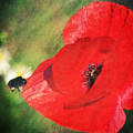 Red poppy impression Print by Angela Doelling AD DESIGN Photo and PhotoArt
