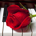 Red rose on piano keys Print by Garry Gay