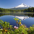 Reflection Of Mount Hood In Trillium Poster by Craig Tuttle