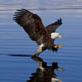 Reflections of Eagle Poster by John Hyde - Printscapes