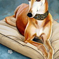 Rescued Greyhound Print by Sandra Chase