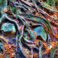 Roots and Rocks Print by Naman Imagery