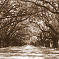 Savannah Sepia - Glorious Oaks Print by Carol Groenen