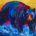 Scouting For Fish - Black Bear Poster by Marion Rose