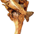 Sea Bass Sculpture Poster by Eric Kempson