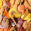 Sea horses and sea shells Poster by Garry Gay