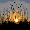 Sea oats at sunset Print by David Lee Thompson