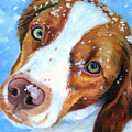 Snow Baby - Brittany Spaniel Print by Lyn Cook
